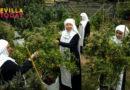 Descubren plantación de marihuana en el claustro de un convento sevillano